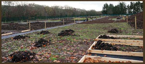 Regional Park Allotments Scheme, Ballincollig in June 2013
